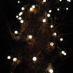 Blog-2011-Soiré-Livre-Ambiance-Lidia04