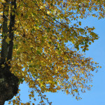 Blog-Arbres-16